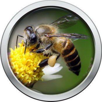 דבורים וצרעות